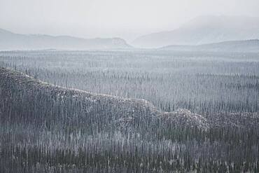 The view over an old forest fire sight. All the trees are covered with a fresh layer of frost. Yukon Territory, Canada