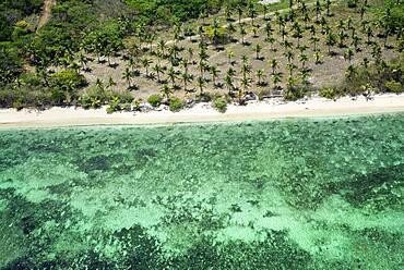 Aerial view of coco palms in Viti Levu coast beach, Fiji