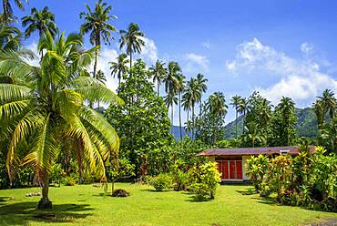 Palm trees at Route de ceinture, Tahiti Nui, Society Islands, French Polynesia, South Pacific.