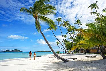 Palms in the beach at Le Bora Bora by Pearl Resorts luxury resort in motu Tevairoa island, a little islet in the lagoon of Bora Bora, Society Islands, French Polynesia, South Pacific.