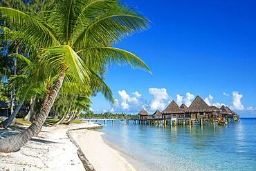 Palms and beach of the Luxury Hotel Kia Ora Resort & Spa on Rangiroa, Tuamotu Islands, French