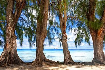 Fakarava, Tuamotus Archipelago French Polynesia, Tuamotu Islands, South Pacific. Trees next to the see and Paul Gauguin cruise.