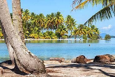 Island of Taha'a, French Polynesia. Motu Mahana palm trees at the beach, Taha'a, Society Islands, French Polynesia, South Pacific.