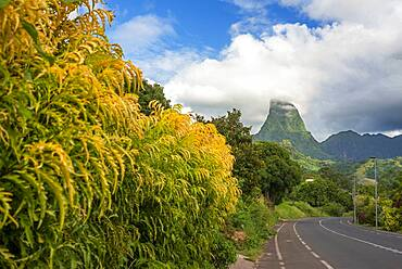 Road way in Cook's bay and Paopao valley in Moorea, French Polynesia, Society Islands, South Pacific. Cook's Bay.