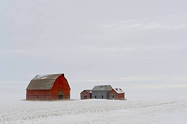 Old barns in prairie snowstorm and fog.