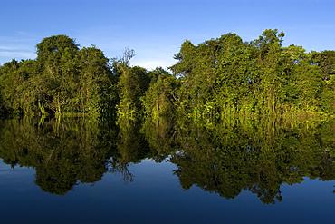 Flooded tropical rain forest, Mamiraua sustainable development reserve, Amazonas, Brazil