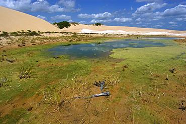 Freshwater lake and sand dunes at Ilha Grande de Santa Isabel, Parnaiba river delta, Piaui, Brazil