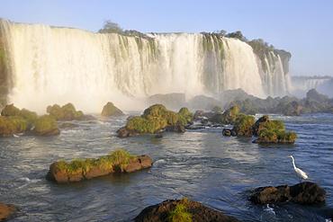 Egret, Egretta alba, at Iguassu Falls, Foz do IguaÁu, Parana, Brazil