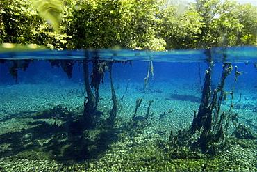 Underwater plants and surrounding vegetation, natural freshwater spring preserve, Aqu∑rio natural, Bonito, Mato Grosso do Sul, Brazil.