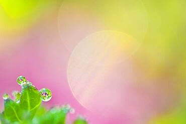 Colorful pattern of raindrops and flower petals.