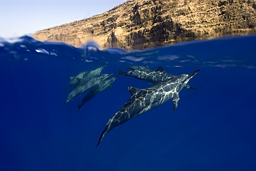 Split image of Spinner dolphins Stenella longirostris, and cliff, Big Island, Hawaii, USA