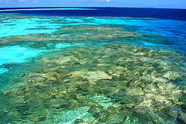 Coral reef, Namu atoll, Marshall Islands (N. Pacific).