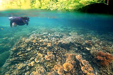 Split image of lush vegetation and free diver observing lettuce coral, Turbinaria reniformis, next to cave entrance, Palau, Micronesia.