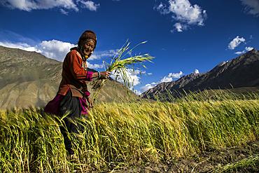 Rural working in Zanskar Valley, Northern India.