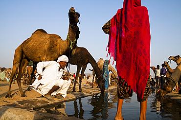 In the ground in Pushkar Camel Fair