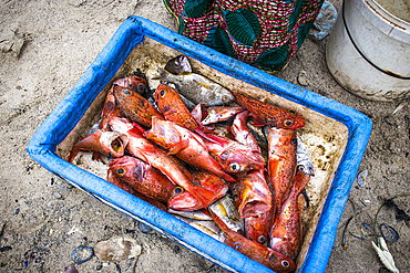 Fish box in the afternoon fish market in Soumbédioune beach when the canoes arrive loaded