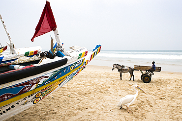 Pelican and boy on a cart pulled by a horse in the afternoon fish market in Mboro Plage beach when the canoes arrive loaded