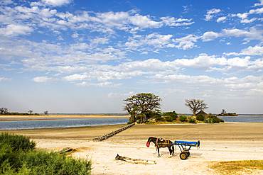 Horse and cart resting in the Saloum Delta