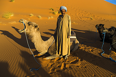 Camel driver with his camels in the Erg Chebbi sand dunes