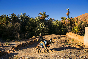 Somebody in an oasis in the Tafrout region in the Anti-Atlas