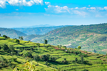 Terraced fields for farming cover the hills of northwestern Rwanda.