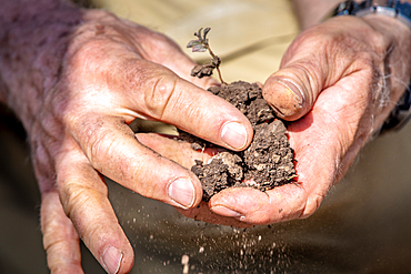 Hands break up chunks of soil, Debre Berhan, Ethiopia.