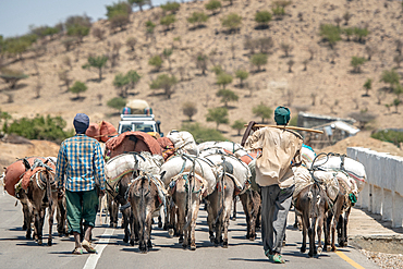 Two men travel behind a pack of donkeys (Equus asinus) carrying packages, Danakil Depression, Ethiopia