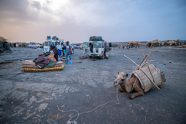 Camels resting at a campsite at Erta Ale Volcano, a continuously active basaltic shield volcano and lava lake in the Afar Region of Ethiopia
