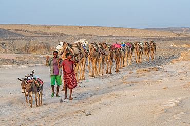Two men lead a caravan in the Danakil Depression, Ethiopia