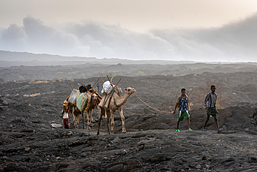 A caravan of camels and tourists traversing the barren volcanic landscape surrounding the Erta Ale Volcano in the Afar Region of Ethiopia