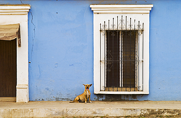 Dog, window and blue wall in the town of Cosal·; Sinaloa, Mexico.