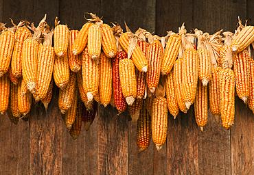 Ears of corn drying; Sridongyen Lisu village, Chiang Mai Province, Thailand