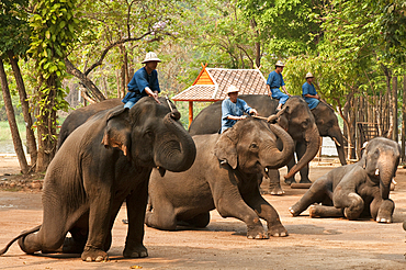 Elephants performing in show at the National Thai Elephant Conservation Center; Lampang, Chiang Mai Province, Thailand.
