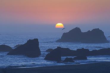 Sun setting into offshore fog bank at Harris Beach State Park, Oregon coast.