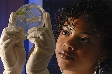 Scientist working in lab with plant material
