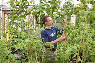 Horticulture researcher in a greenhouse
