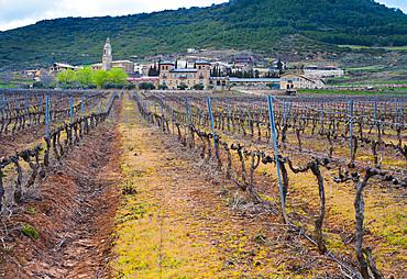 Vineyard. Villamayor de Monjardin. Navarre, Spain, Europe