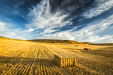 Cereal land. Tierra Estella county, Navarre, Spain, Europe