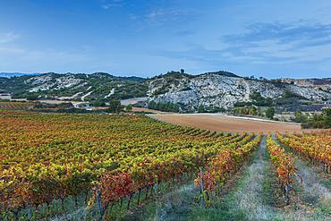 Vineyard in autumn. Ayegui, Navarre, Spain, Europe