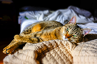 Cat resting in a bed.