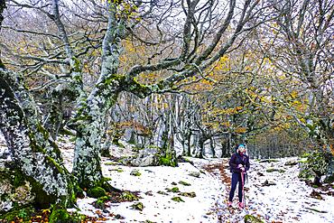 Beechwood in winter. Mount Ioar. Navarre, Spain, Europe