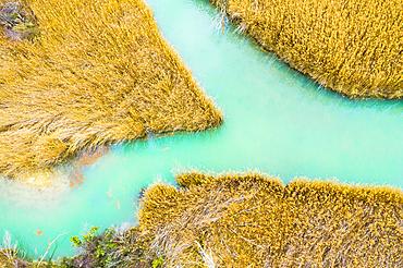 Reedbed and river. Alloz reservoir. Navarre, Spain, Europe