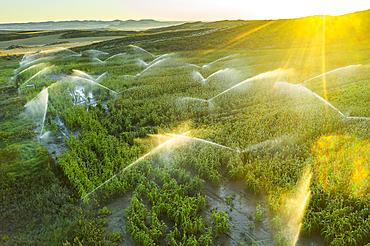 Farmland with watering. Aerial view. Navarre, Spain, Europe