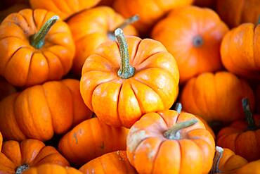 Small pumpkins for sale in Cashtown, Pennsylvania, USA
