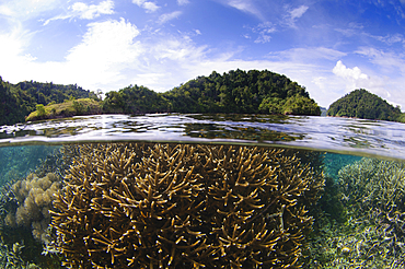 Split photo of branching staghorn corals, Acropora sp., and islands in the background, Loloda Selatan, Spice Islands, Maluku Region, Halmahera, Indonesia, Pacific Ocean