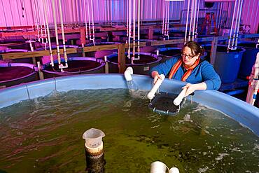 Woman conducting research in an aquaculture lab at Delaware State University