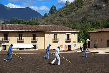 Workers in Filadelfia coffee estate, R. Dalton Coffee Company, Antigua, Guatemala