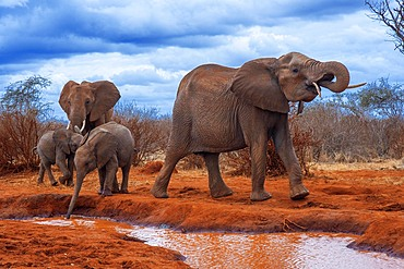 An elephant covered in red dust blocks a track in Kenya s Tsavo National Park