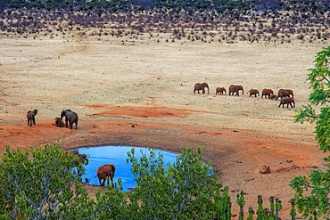 Elephants covered in red dust blocks a track in Kenya s Tsavo National Park