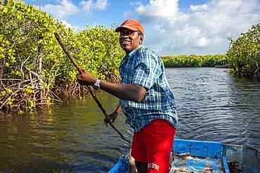 Dhow sailing through Makanda Channel, Lamu archipelago, Kenya. Red mangroves along coastline of Manda Island